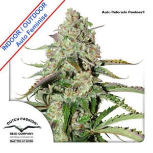 Auto Colorado Cookies Feminise