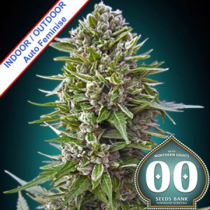 Auto Northern Lights Feminise